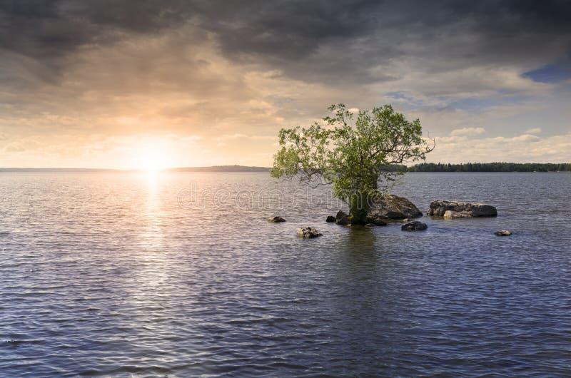 Árbol solitario en el lago imagenes de archivo