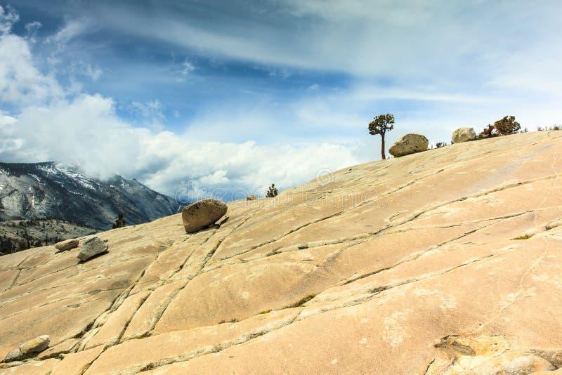 Árbol solitario en el parque nacional de Yosemite fotos de archivo