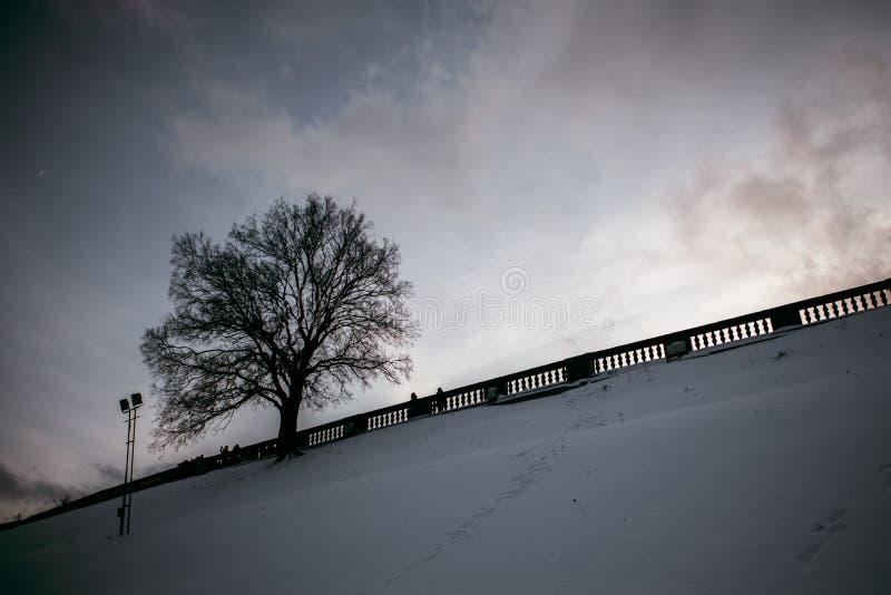 Árbol solitario en la colina nevosa después de la puesta del sol fotografía de archivo