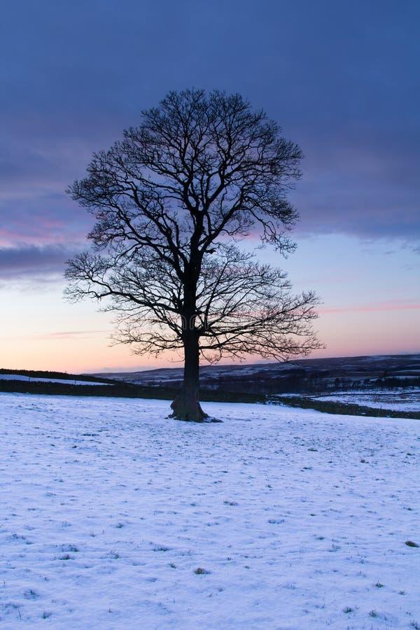 Árbol solitario en la oscuridad imagen de archivo libre de regalías
