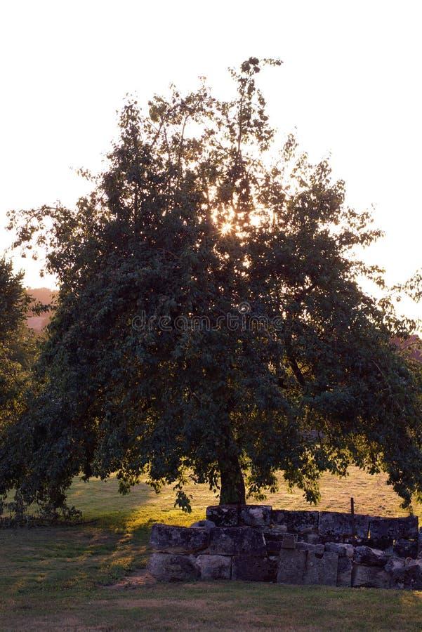 Árbol solitario en la puesta del sol en un paisaje Francia del verano del campo fotografía de archivo libre de regalías