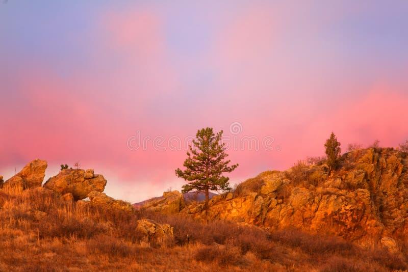 Árbol solitario en la salida del sol fotografía de archivo libre de regalías
