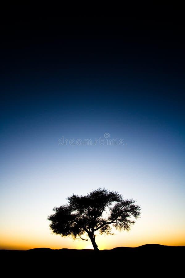 Árbol solitario en la salida del sol de la puesta del sol fotografía de archivo libre de regalías