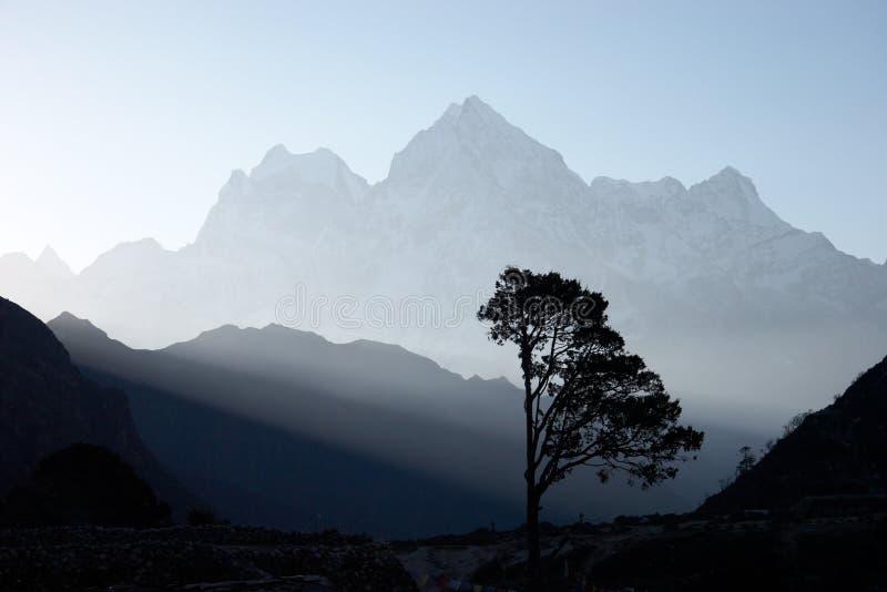 Árbol solitario en la salida del sol, Himalaya, Nepal imagen de archivo libre de regalías