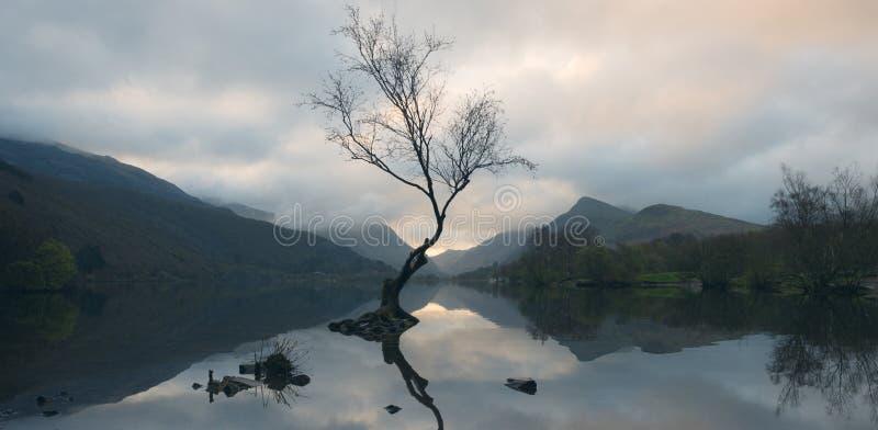 Árbol solitario en Llyn Padarn fotos de archivo libres de regalías