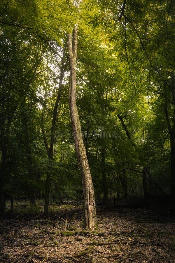 Árbol solitario en luz foto de archivo libre de regalías