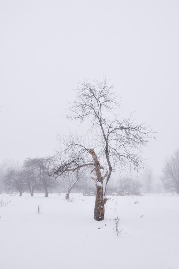 Árbol solitario en nieve imagenes de archivo