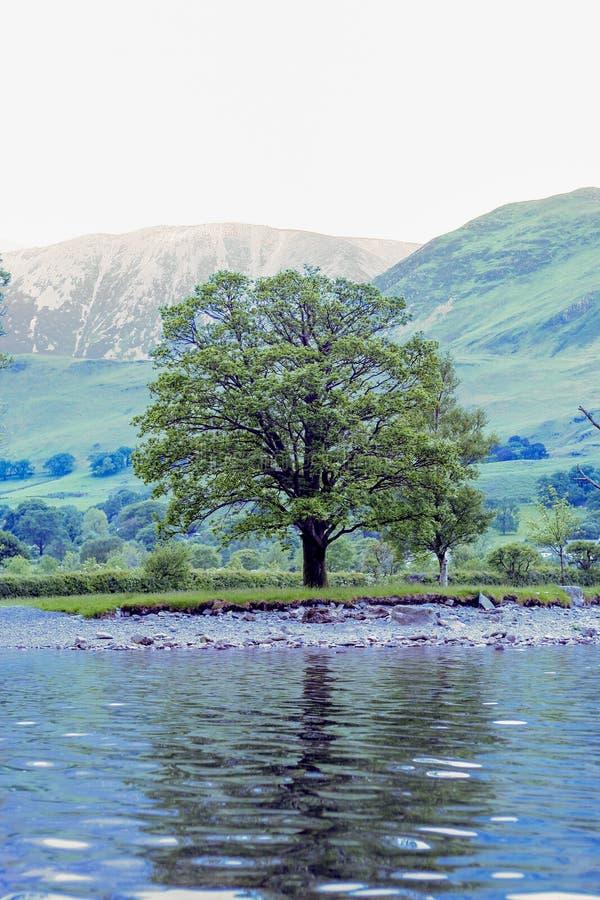 Árbol solitario en orilla del lago fotografía de archivo
