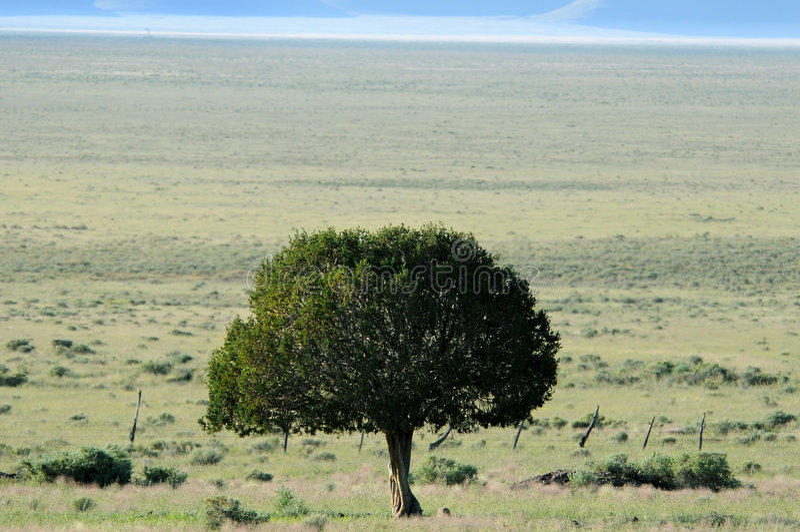 Árbol solitario en paisaje del desierto fotografía de archivo libre de regalías