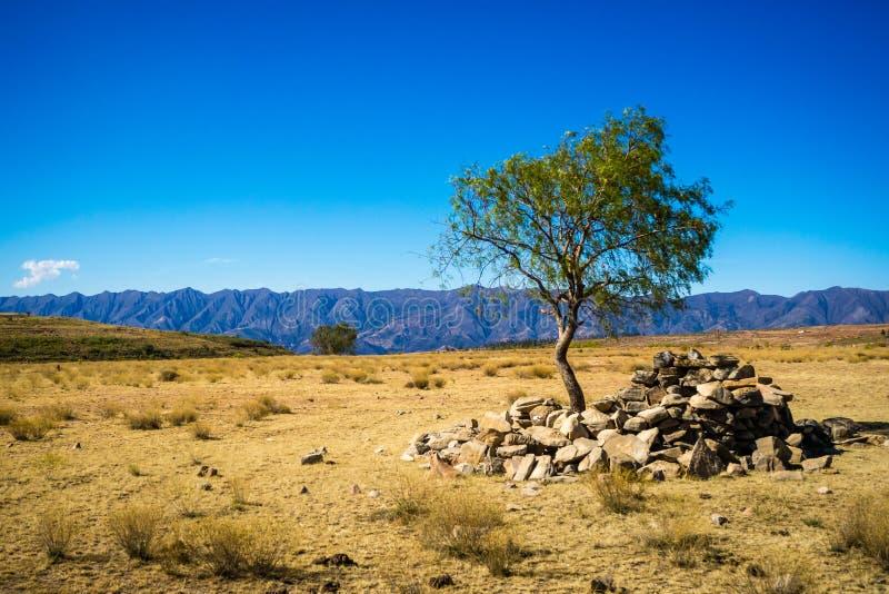 Árbol solitario en Toro Toro Bolivia imagen de archivo libre de regalías