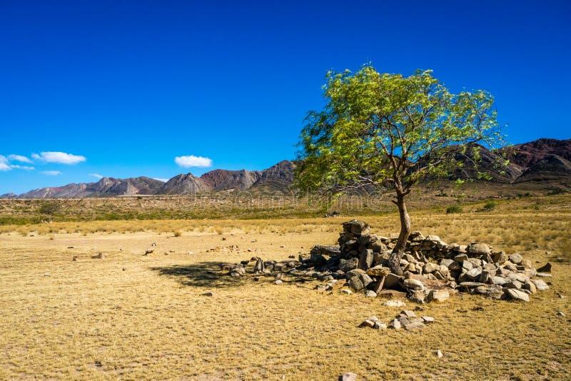Árbol solitario en Toro Toro Bolivia foto de archivo
