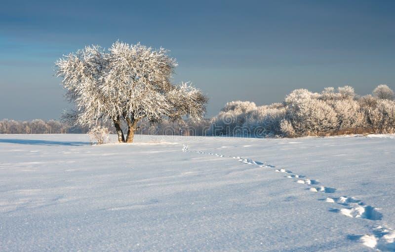 Árbol solitario en un campo cubierto con nieve fotografía de archivo libre de regalías