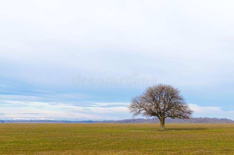 Árbol solitario en un campo de la cosecha Paisaje hermoso del campo foto de archivo