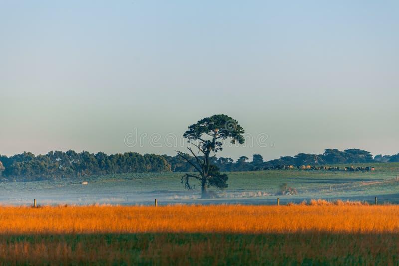 Árbol solitario en un campo en la salida del sol imágenes de archivo libres de regalías