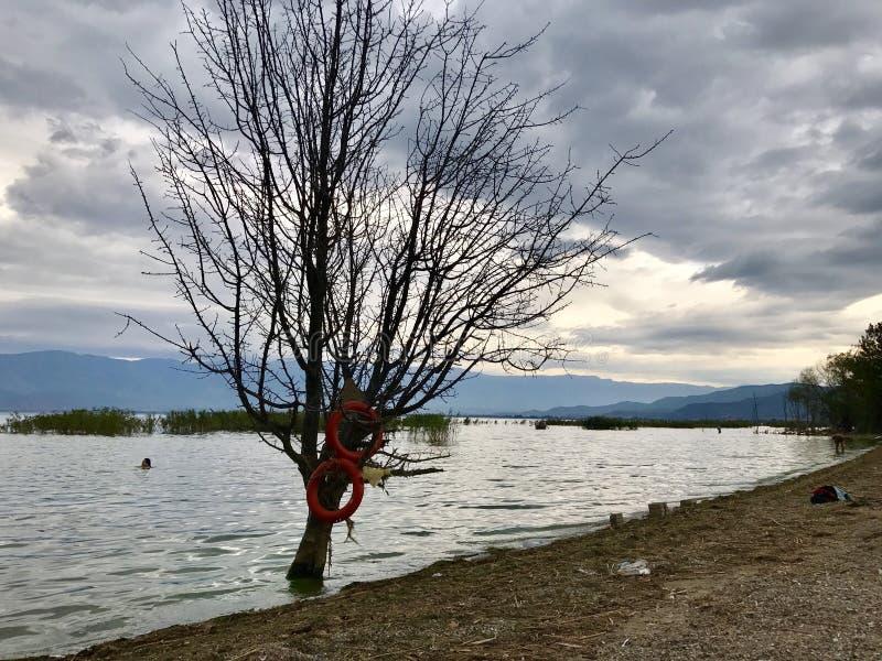 Árbol solitario en un lago foto de archivo