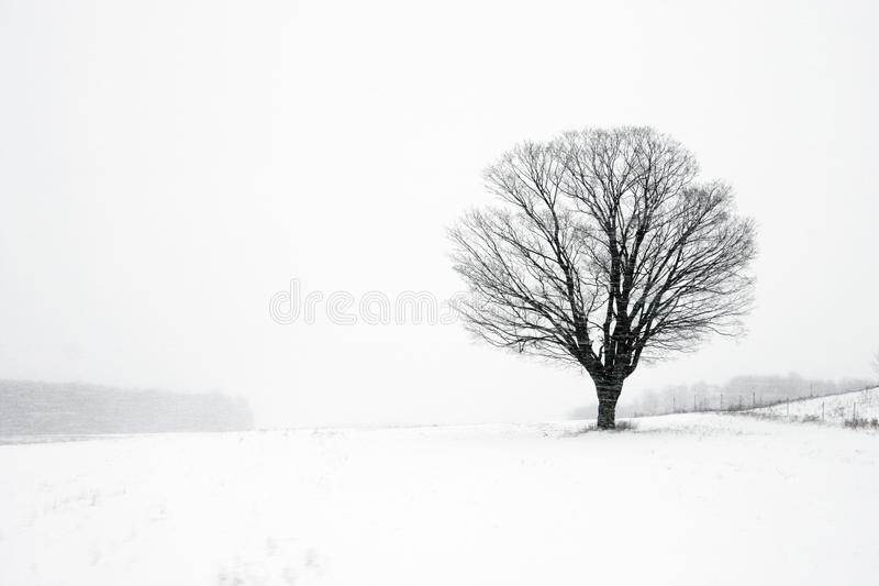Árbol solitario en ventisca del invierno fotos de archivo libres de regalías