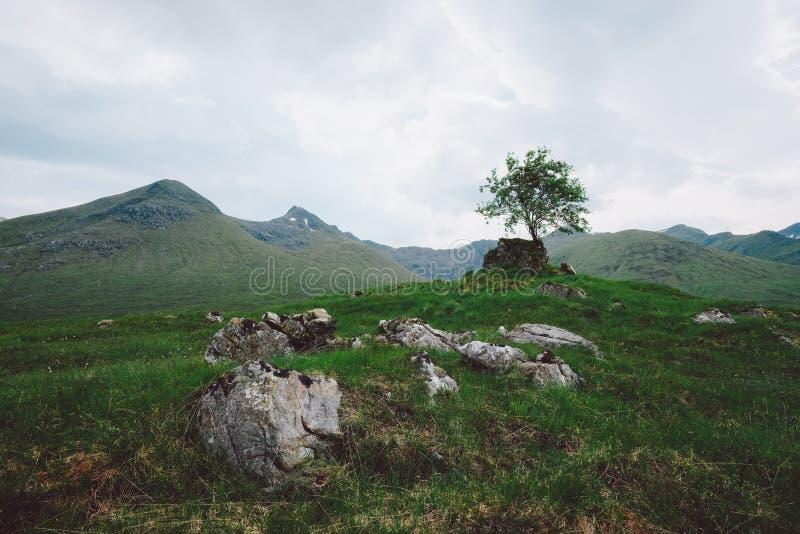 Árbol solitario, Escocia fotografía de archivo