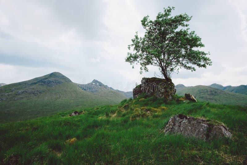 Árbol solitario, Escocia imagen de archivo libre de regalías