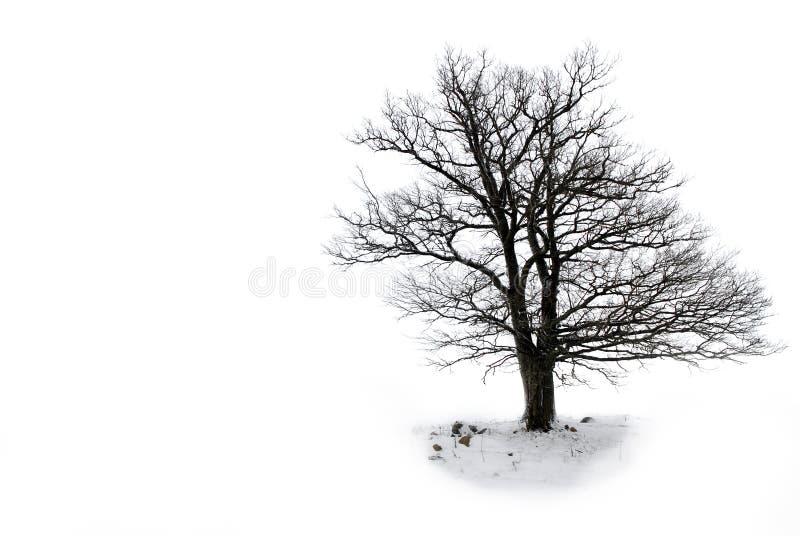 Árbol solitario sin las hojas imagen de archivo