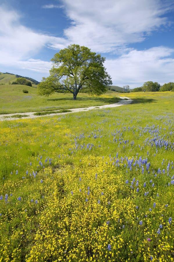 Árbol solitario y ramo colorido de flores de la primavera que florecen de la ruta 58 en el camino de Shell Creek, al oeste de Bak fotografía de archivo libre de regalías