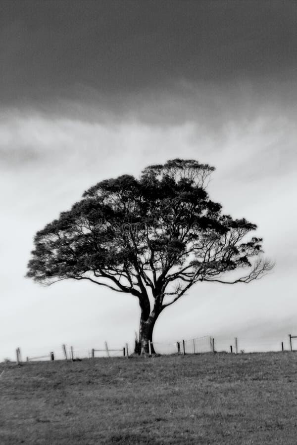 Árbol solo imagen de archivo libre de regalías