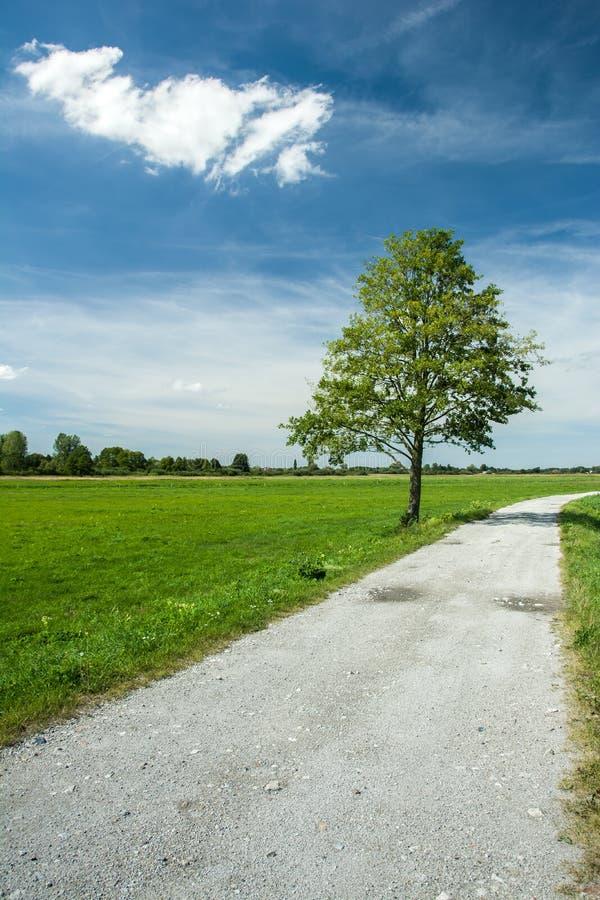 Árbol solo al lado del camino de la grava imagen de archivo
