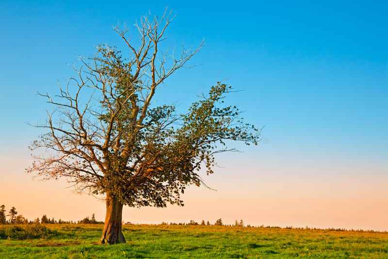 Árbol solo antes de la puesta del sol fotografía de archivo libre de regalías