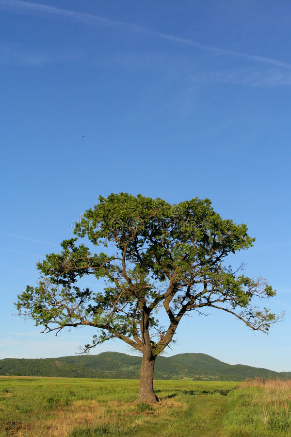 Árbol solo bajo el cielo azul grande imagenes de archivo