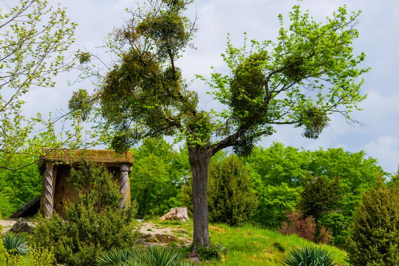 Árbol solo cerca de los dólmenes viejos del Cáucaso en la región del Mar Negro en Rusia fotos de archivo