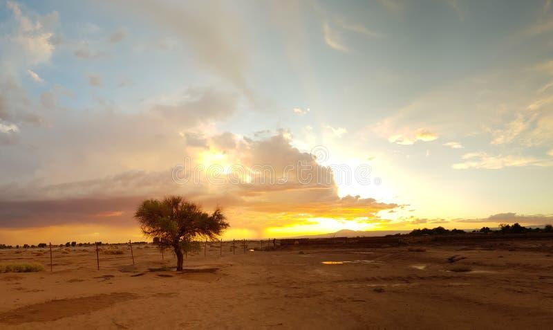 Árbol solo con la tormenta en la puesta del sol en el desierto de Atacama, Chile fotografía de archivo libre de regalías