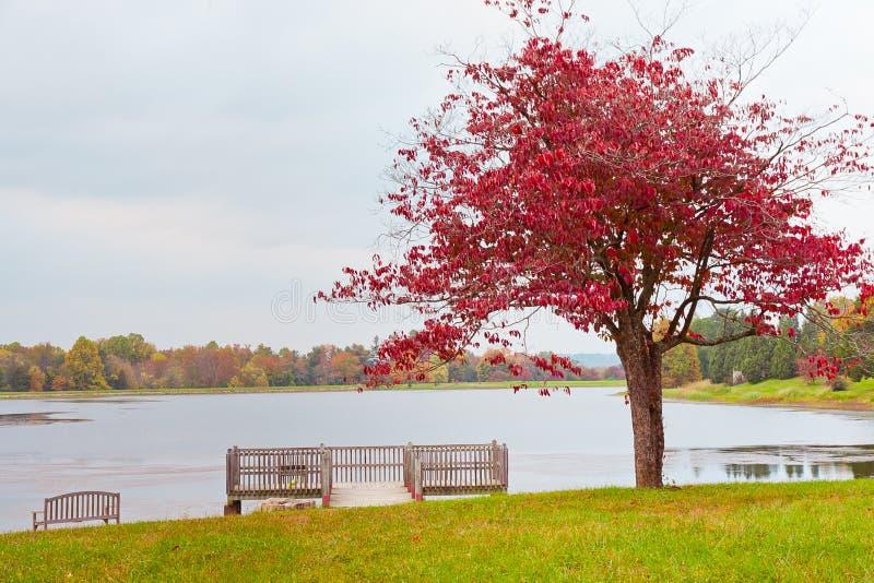 Árbol solo del otoño cerca del lago en día cubierto foto de archivo