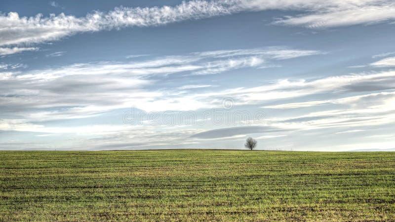 Árbol solo en campo verde foto de archivo libre de regalías