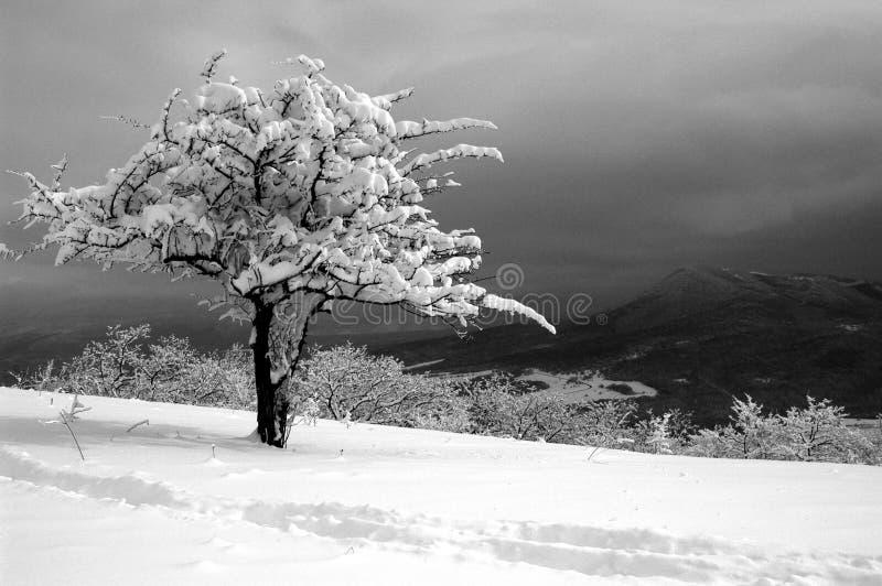 Árbol solo en el invierno en montañas imagen de archivo