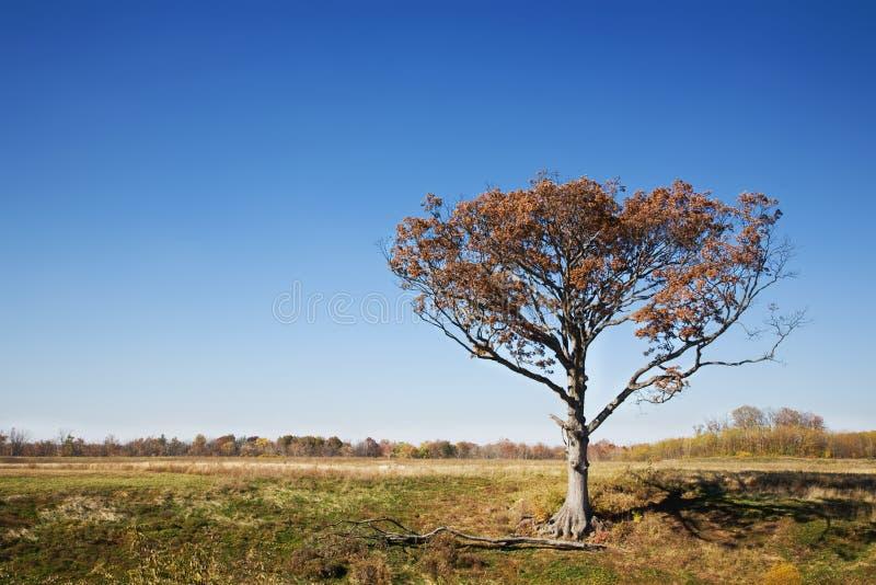 Árbol solo en el otoño imagen de archivo libre de regalías