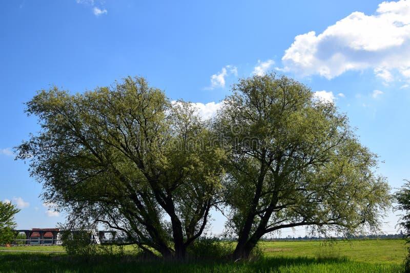 Árbol solo en el paisaje holandés fotos de archivo libres de regalías