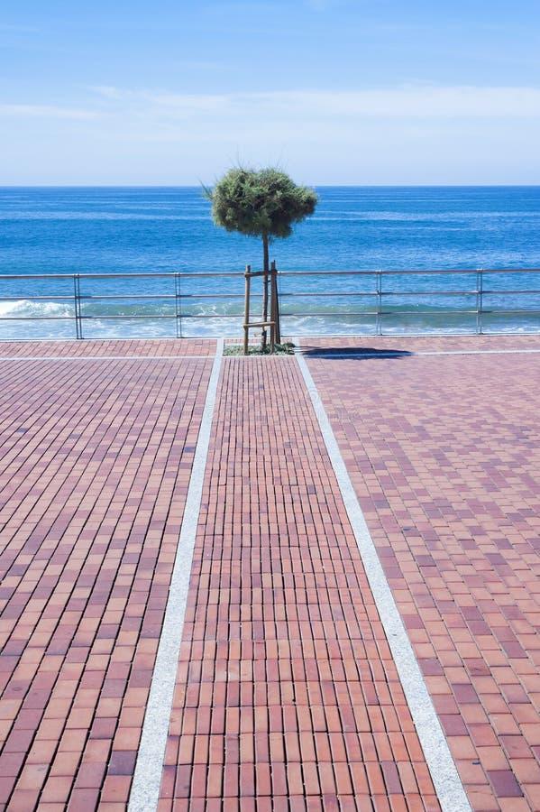 Árbol solo en la playa imagenes de archivo