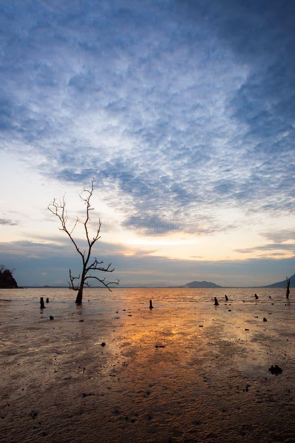 Árbol solo en la playa fangosa en la puesta del sol foto de archivo libre de regalías