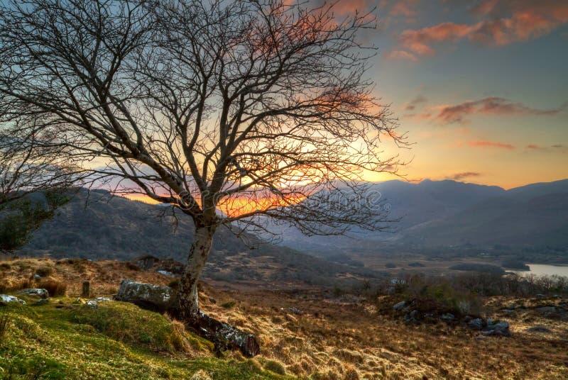 Árbol solo en la puesta del sol en montañas imagen de archivo libre de regalías