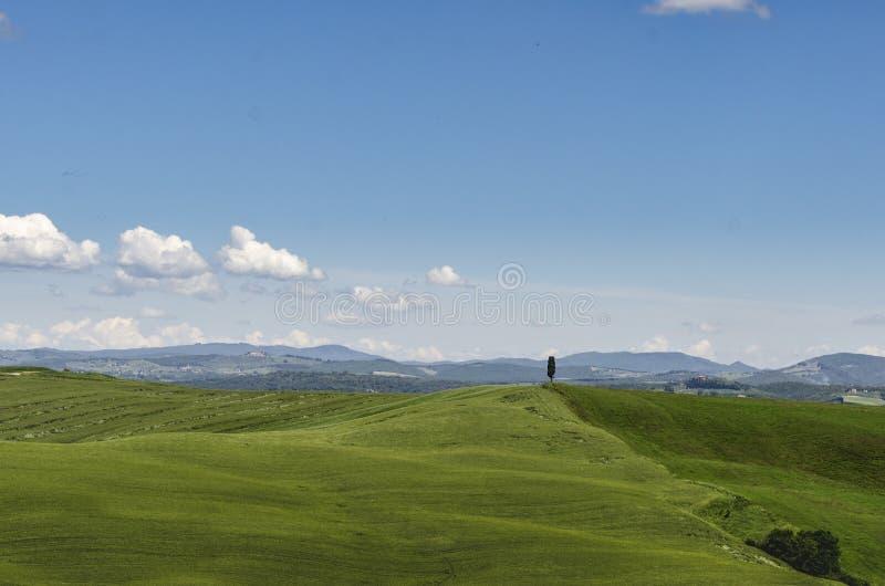 Árbol solo en las colinas verdes de Toscana imagen de archivo