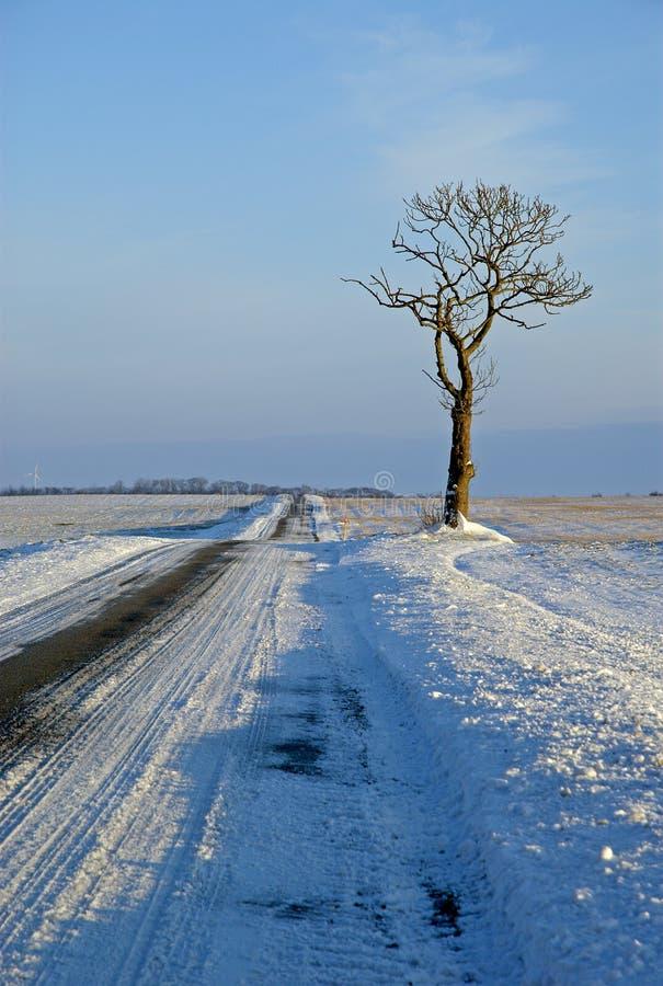 Árbol solo en paisaje del invierno en la Navidad imagenes de archivo