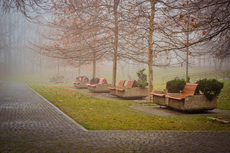 Árbol solo en parque del IOR fotos de archivo