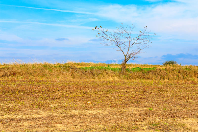 Árbol solo en un campo foto de archivo