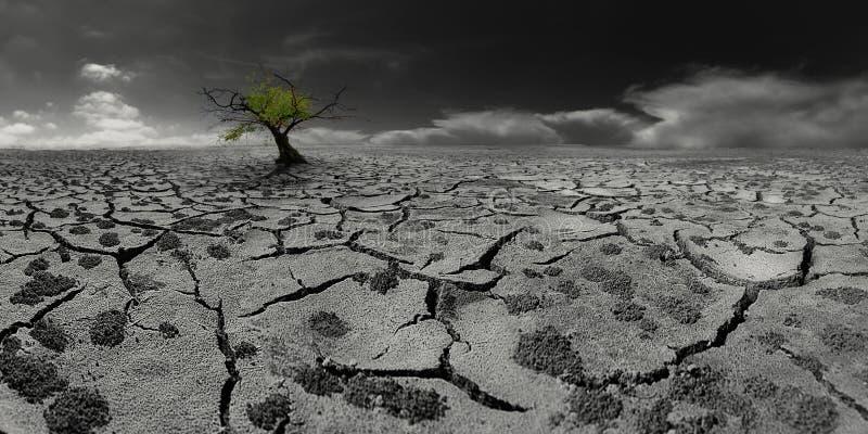 Árbol solo en un paisaje posts-apocalíptico del desierto fotografía de archivo libre de regalías