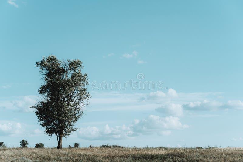 Árbol solo en un prado, paisaje debajo del cielo azul imágenes de archivo libres de regalías