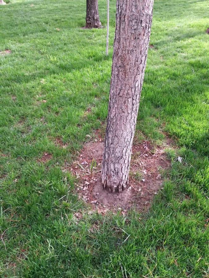 Árbol solo entre hierba fotos de archivo libres de regalías