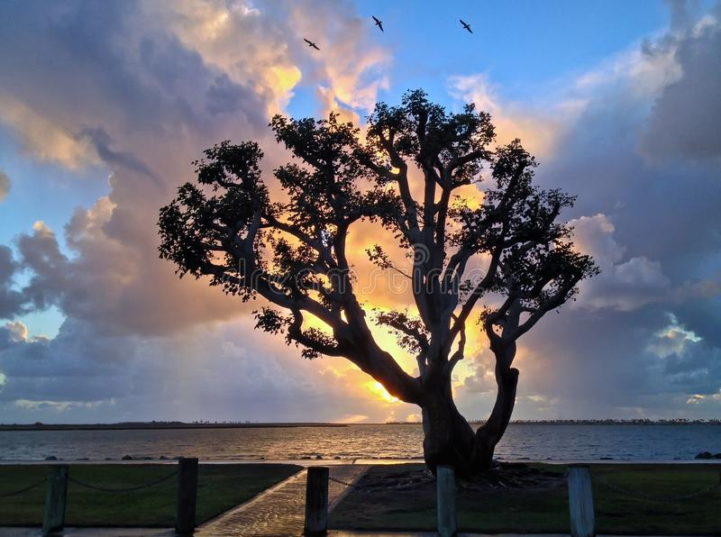 Árbol solo silueteado contra puesta del sol mágica imagen de archivo