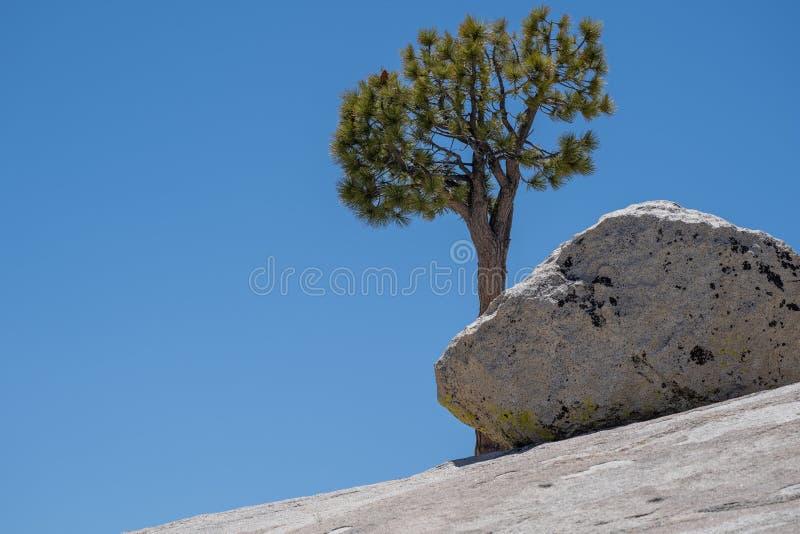 Árbol solo, solitario famoso en el punto de Olmstead en el parque nacional de Yosemite en un día de verano soleado fotografía de archivo
