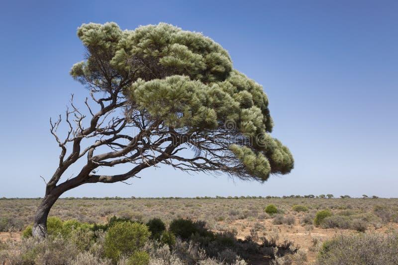 Árbol soplado viento foto de archivo