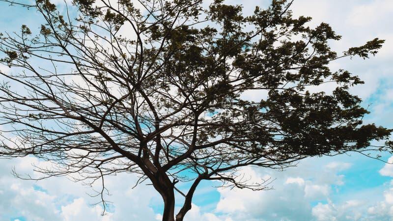 Árbol sucio artístico en Palu Bay imagen de archivo