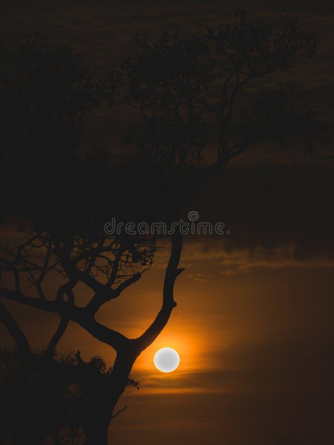 Árbol The Sun de la silueta a través de un haz fotos de archivo libres de regalías